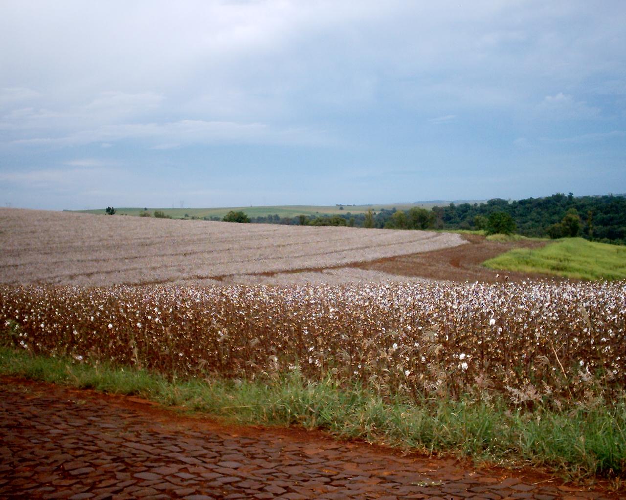 Imprese agricole: più giovani, fanno rete e puntano su qualità