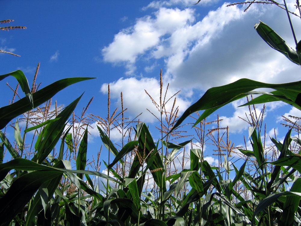 ALIMENTAZIONE – Ministero della Salute – Documento su allergie alimentari e sicurezza del consumatore